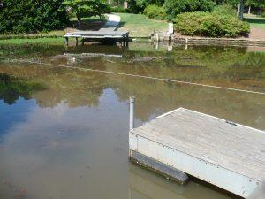 Pond Muck Before Dino Six